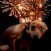 Is je hond bang van vuurwerk