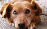 Bachbloesem Mix 100 Honden en vuurwerk