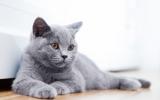Bachbloesem Mix 110 Agressie bij katten