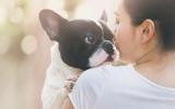 Bachbloesem Mix 102 Onzindelijkheid bij honden
