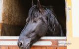 Bachbloesem Mix 121 Bange paarden