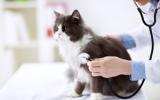 Bachbloesem Mix 111 Stress bij katten