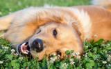 Bachbloesem Mix 104 Aanvallen bij honden