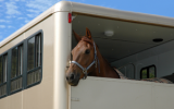 Bachbloesem Mix 122 Trailer stress paard
