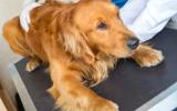 Bachbloesem mix 106 Stress bij honden